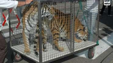 Le Costa Rica interdit les animaux de cirque