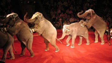 Barcelone ne veut plus d'animaux sauvages sur les pistes
