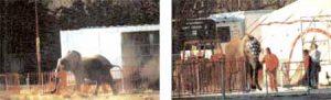 JONQUIÈRES (84) LE 12 MARS 2005 / VEDÈNE (84) LE 16 MARS 2005.