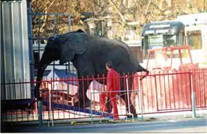 VEDÈNE (83) LE 16 MARS 2005.