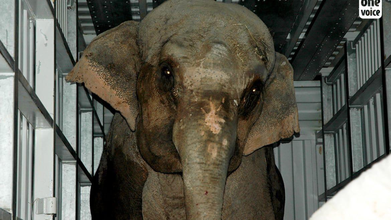 Éléphante saisie au cirque Willie Zavatta : le tribunal confirme la confiscation