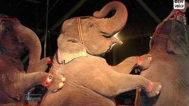 Une prise de conscience sur la condition des animaux de cirques