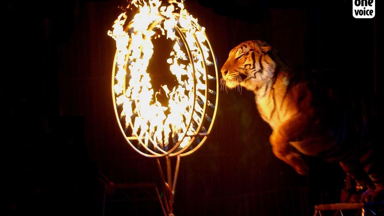 La Bolivie interdit l'utilisation de tous les animaux dans les cirques