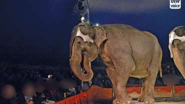 Le Portugal interdit l'utilisation des animaux sauvages dans les cirques