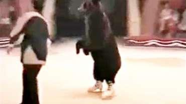 Un ours abattu après avoir tué le directeur d'un cirque