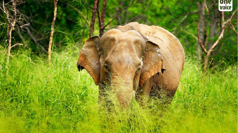 Stop à l'esclavage des éléphants en Inde !