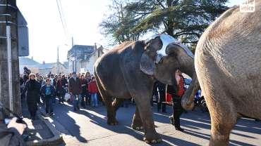 Sécurité dans les cirques : danger pour tous