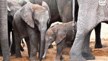 Total respect pour les animaux sauvages
