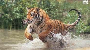 Fin de l'exploitation des animaux sauvages dans les cirques anglais